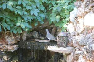 Dove Visit to Waterfall