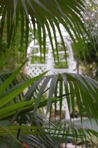 Fab Palms